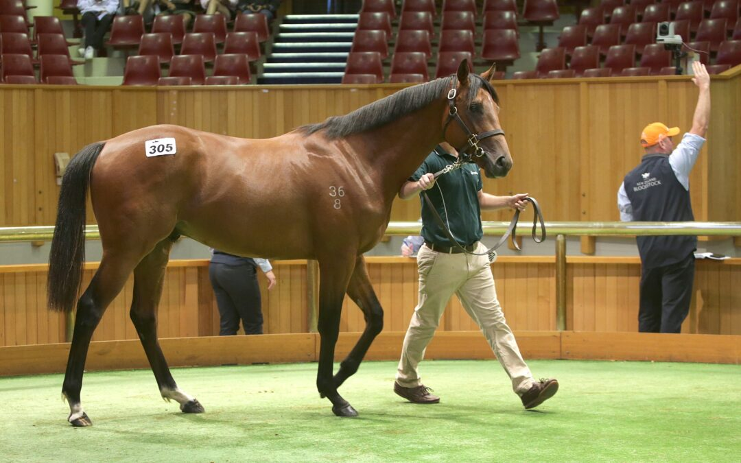 BP Bloodstock active at NZB Ready To Run